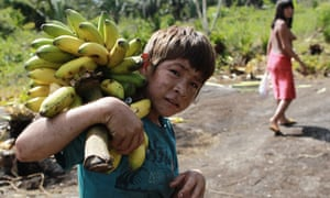 A young Araweté man carrying plantains.