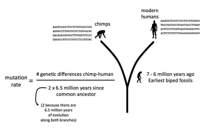Why we're closer than ever to a timeline for human evolution
