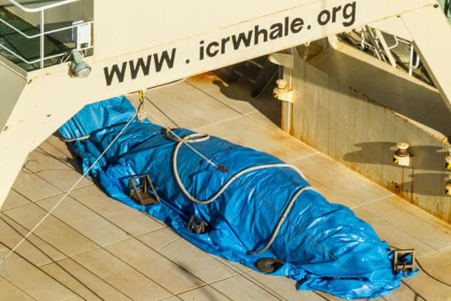 The Japanese crew of Nisshin Maru attempted to hide the minke whale carcass with a tarpaulin, say Sea Shepherd.
