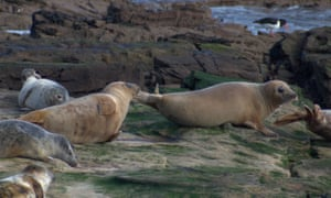 Seals at Whitley Bay on 7 March.