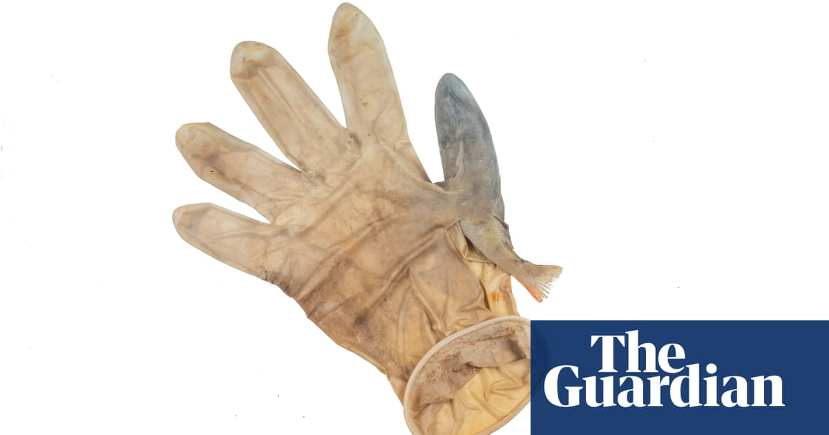 Trapped in gloves, tangled in masks: Covid PPE killing animals, report finds