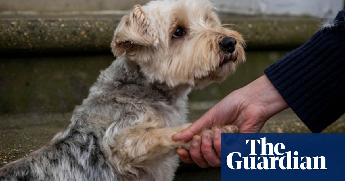 Buying lockdown dogs on a whim can lead to trouble, says RSPCA