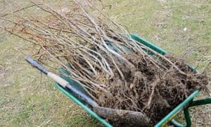 Nature S Root Cbd