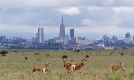 The Nairobi skyline in the background as hartebeests graze at the national park.
