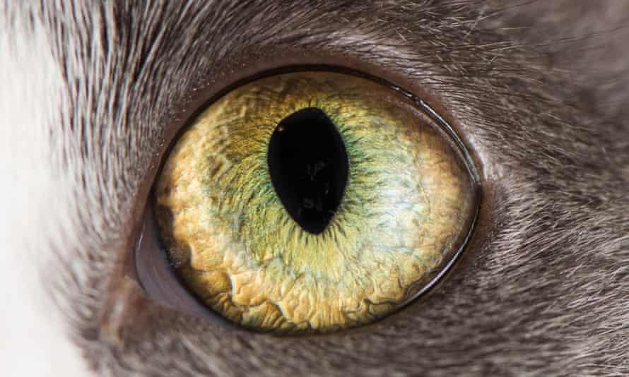 Cats: plotting your demise?