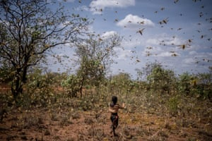 A boy chases away a swarm of locusts in garden in Bilayolo village in Kitgum district, north Uganda.