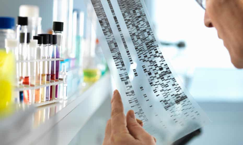 Scientist views a DNA sequence gel in a laboratory.