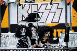 Dogs dressed up like the rock band Kiss