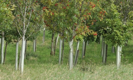 Newly planted trees