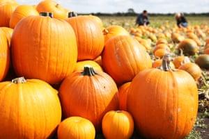 XL pumpkins by Asda