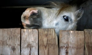 A community-owned horse is seen in a village east of Budapest. The village of Megyer is being put up for rent by its mayor