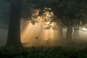 Wild woods category: Chaitanya Deshpande, 'A Flutter in the Woods', London, England