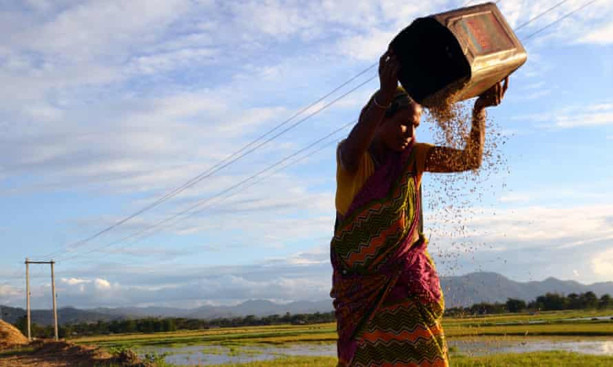 A woman winnows rice paddy to separate husk and impurities in Assam, India.