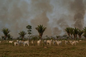 The forest burns near the community of Palmeiras in the Amazon state of Rondônia.