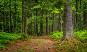 The Bohemian forest of the Šumava national park.