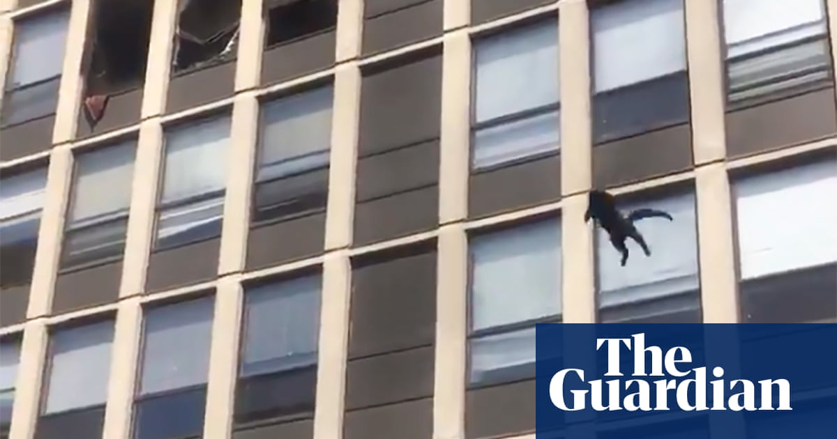 Cat jumps from fifth-floor of burning Chicago building, bounces once and runs away