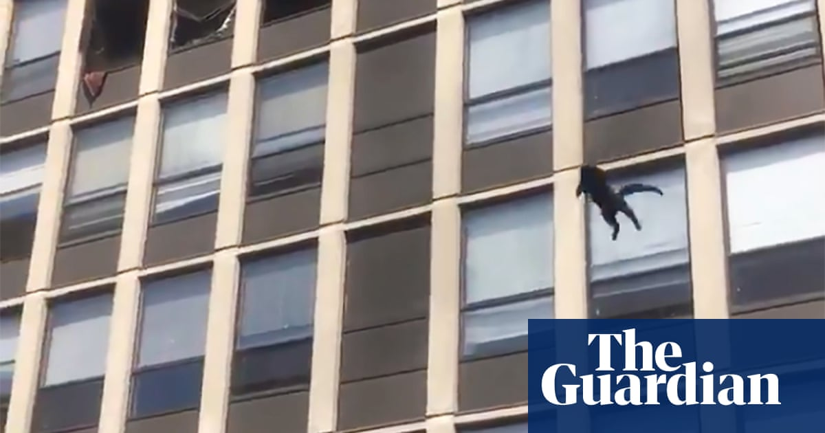 Cat lands unharmed after jump from fifth-floor of burning Chicago building – video