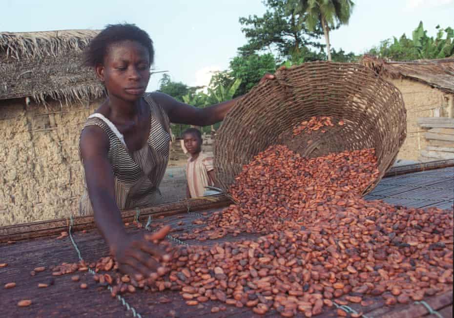 Fairtrade cocoa farmers in Ghana, Africa.