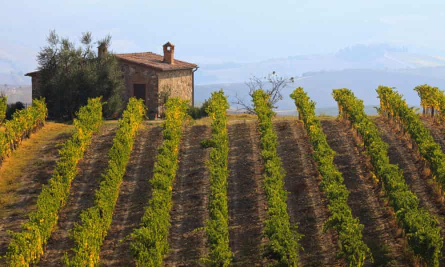 Vines on a hillside near Montalcino, Tuscany.