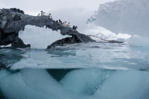Adélie penguins in Hope Bay, where one of the largest Adélie penguin colonies in Antarctica is situated on Trinity Peninsula