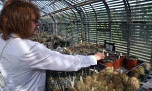 Botanist Karen Little specialises in cacti conservation.