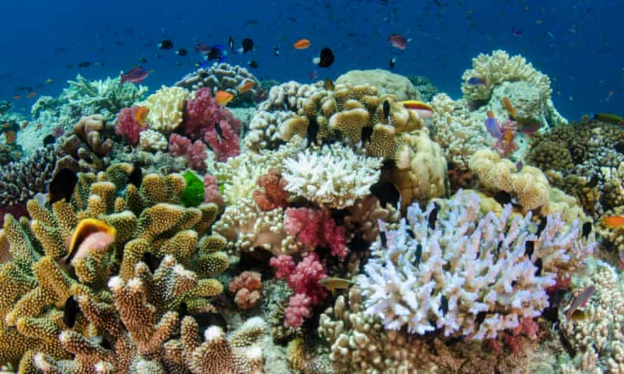 Coral reef showing a diversity of corals in Fiji.