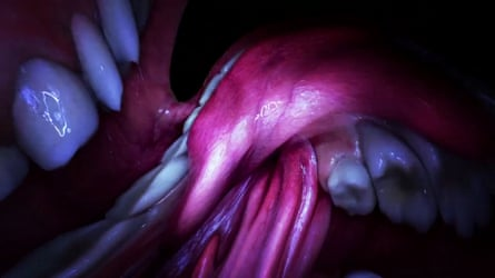 A still from the film clip to Mouth Mantra, which was shot from inside the mouth of Björk.