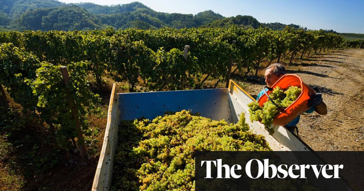 Give gavi a go – the workhorse wine that really shines