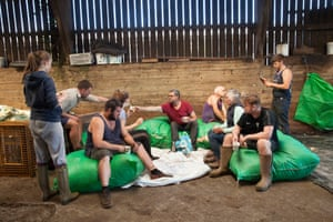 The sheep-shearing team take a break on Langdon Barton Farm in Wembury, Devon.