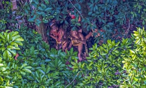 An isolated Amazon tribe