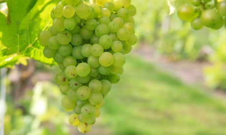 Pop a few corks! Why Essex's vineyards are the best for bubbly