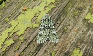 Moth Night at Centre Parcs, Longleat Forest.