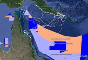 Hawksbill turtles tracked through Coral Sea marine park