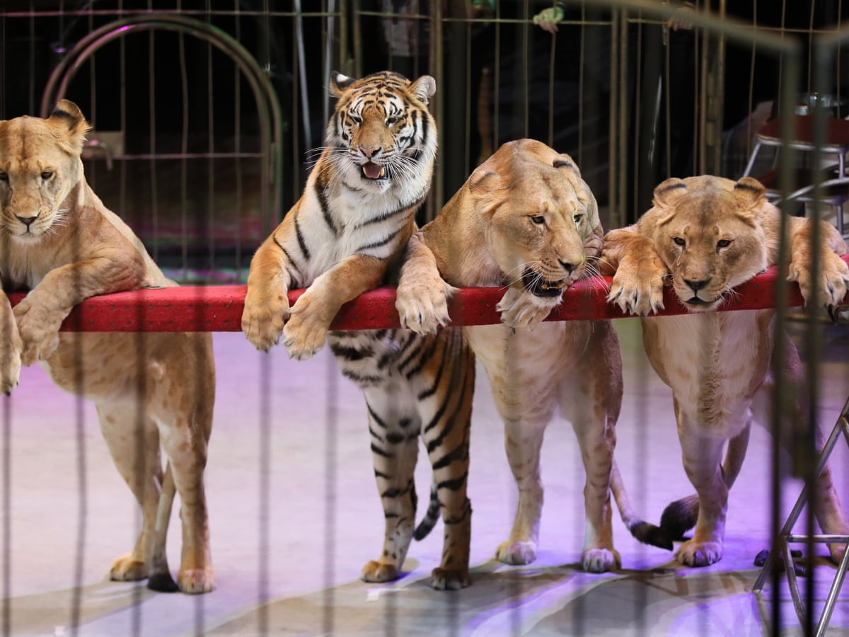 Scotland bans use of wild animals in travelling circuses | World ...