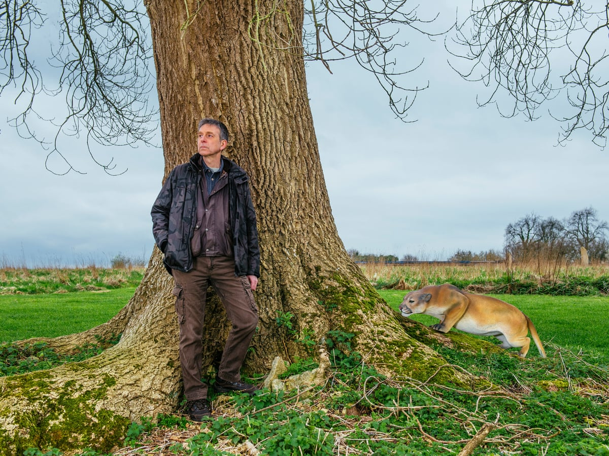 On The Trail Of Britain S Wild Big Cats Cats The Guardian