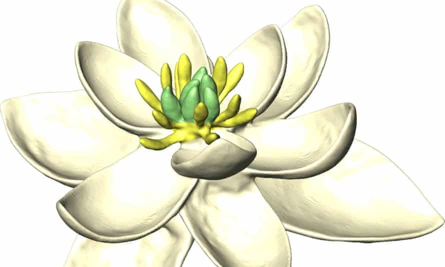 A three-dimensional reconstruction of the world's first flower.