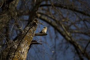 An owl at Madrid's Casa Campo park