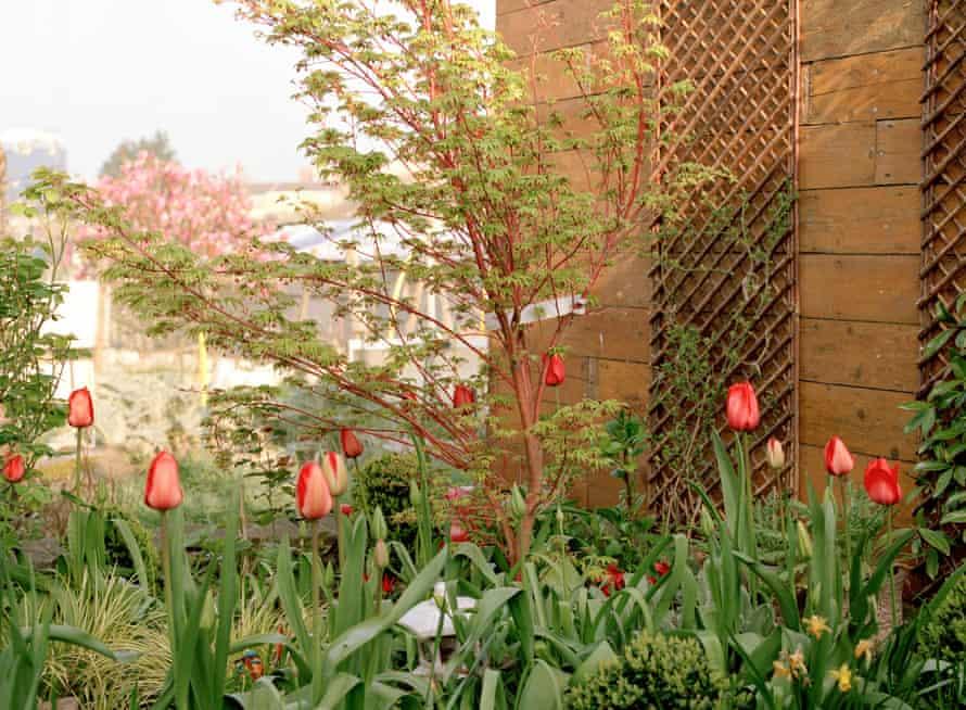 Lea Adri-Soejoko's memorial, close to the entrance of Colindale allotments