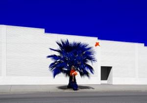 Palm, 2017