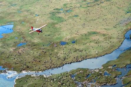 Un avion survole le caribou dans la plaine côtière du refuge faunique national de l'Arctique dans le nord-est de l'Alaska.