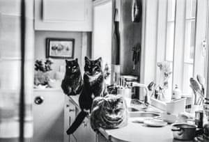 Tombola, Tom Gosling and Tammy, Hampshire, 1985 from Jane Bown: Cats