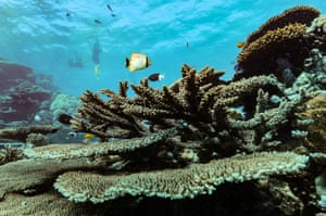 """This is another healthy, beautiful coral garden showing high levels of diversity in structure and form. Miller says this is what drives people to visit the Great Barrier Reef: """"Tourism operators depend on healthy reefs."""""""