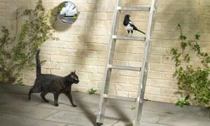 A black cat, ladder, magpie and broken mirror
