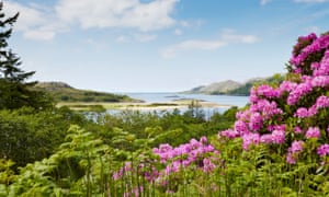 Treasure island: the stunning shore at Eilean Shona with purple foliage and lots of blue sky.