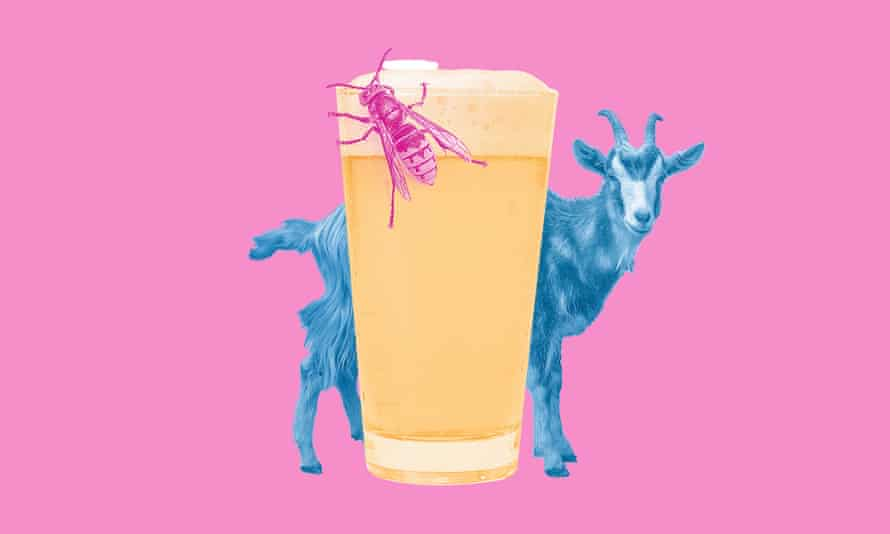 Composite of pint of beer with fly on it and goat behind, against a pink background
