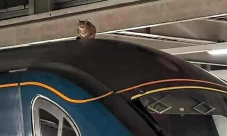Cat on a train roof at London Euston station