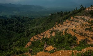 Deforestation to make way for palm plantations in the Leuser Ecosystem, Indonesia