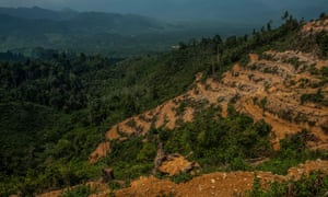 Deforestation in the Leuser ecosystem, Sumatra