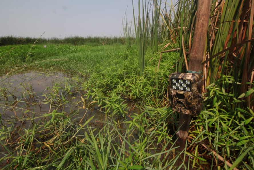 A camera trap installed in an area of Chilika known to be frequented by fishing cats.
