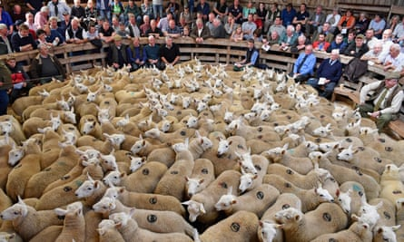 People watch as sheep farmers gather at an auction